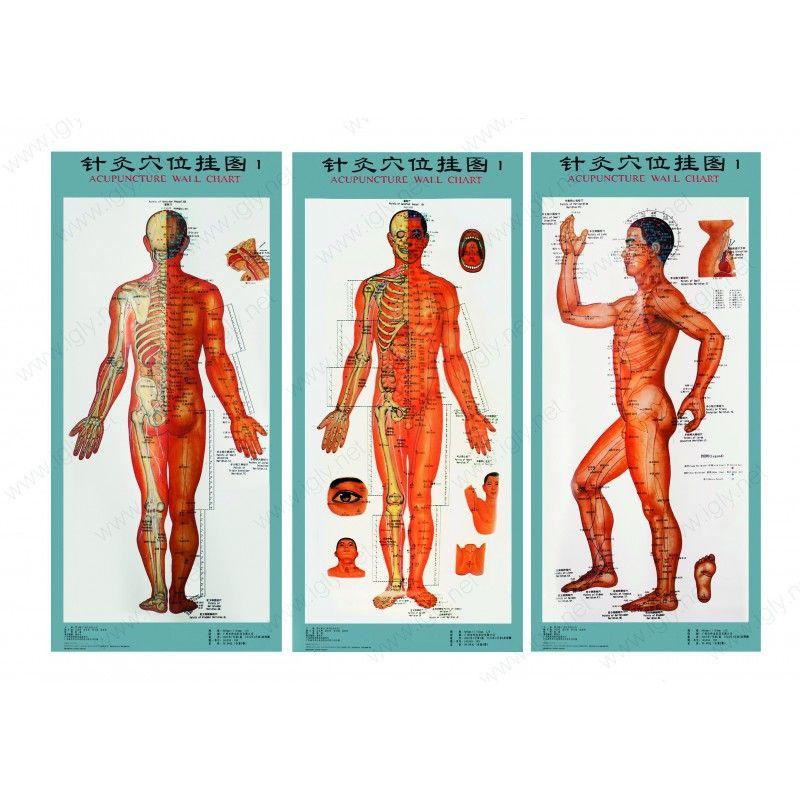 Mapy Akupunkturnich Bodu A Drah Tao Shop Cs